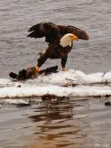 eagle-edited