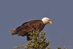 eagle1kingston-min